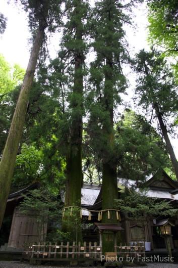 高千穂神社(夫婦杉)