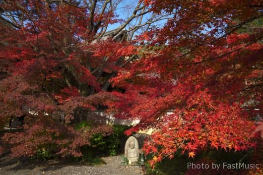 実相院門跡の紅葉
