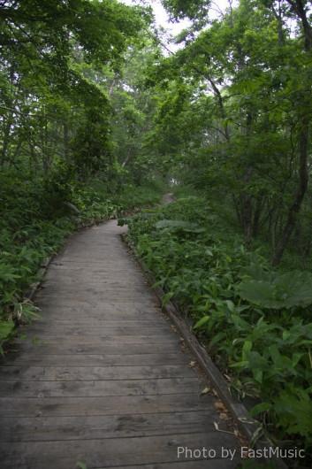湿原展望遊歩道