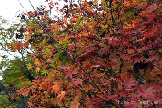 不作の南禅寺紅葉