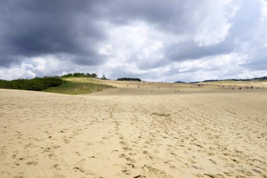 鳥取砂丘とイノシシの足跡