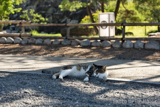 松本城(猫)