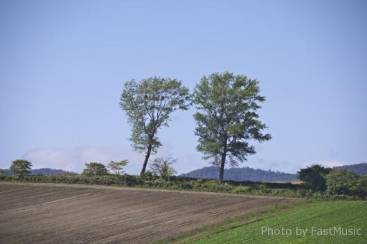 パフィーの木