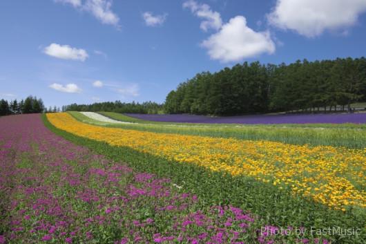 ファーム富田「彩りの丘」