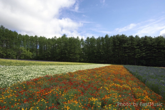 ファーム富田「森の彩りの畑」