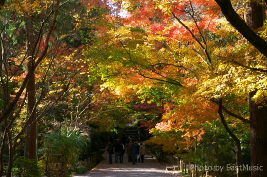 龍安寺の紅葉